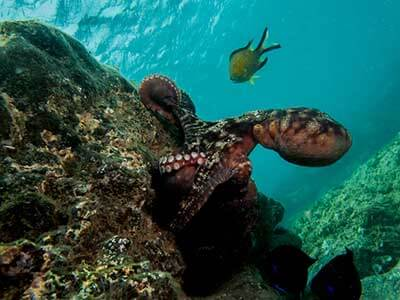 House Reef, huisrif, duiken, Dive College, Playa Blanca