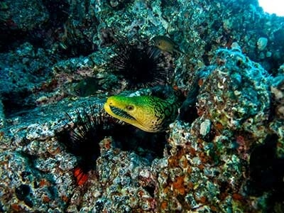 Moray Reef, buceo, Playa Blanca, Dive College Lanzarote