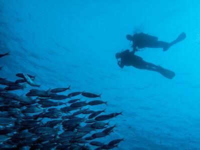 Dive College Lanzarote, plongée, El Emisario, Playa Blanca