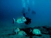 Deep dive, Dive College Lanzarote