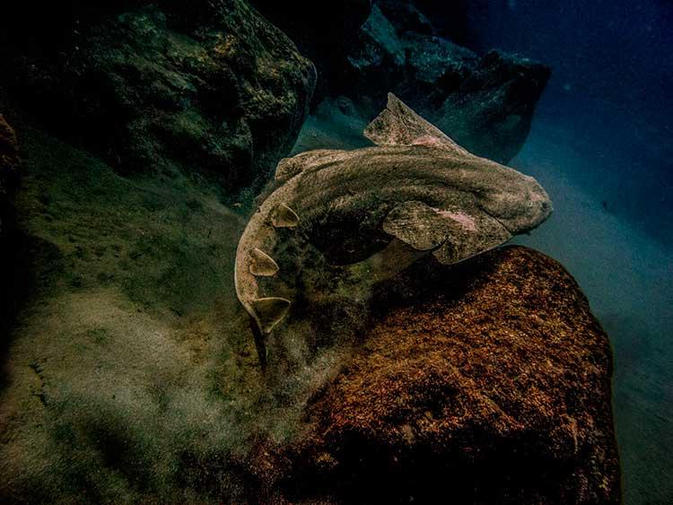diving Playa Blanca