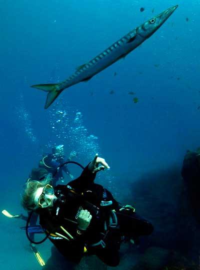 Specialty Diver, specialties, Lanzarote, Barracuda