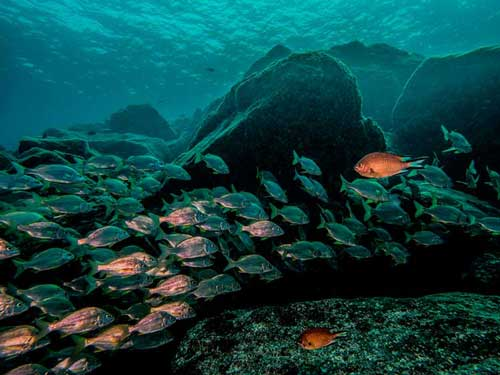 Proefduik deel 2, Dive College Lanzarote