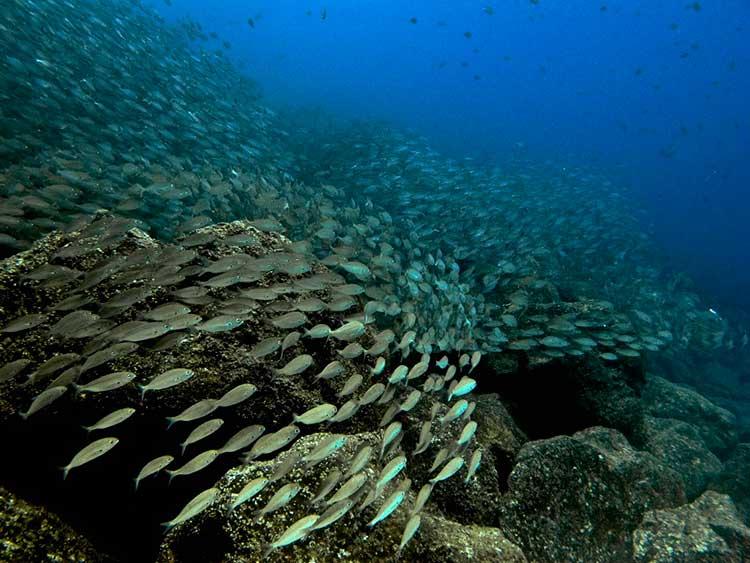Dive College Lanzarote, duiken, El Emisario, Playa Blanca