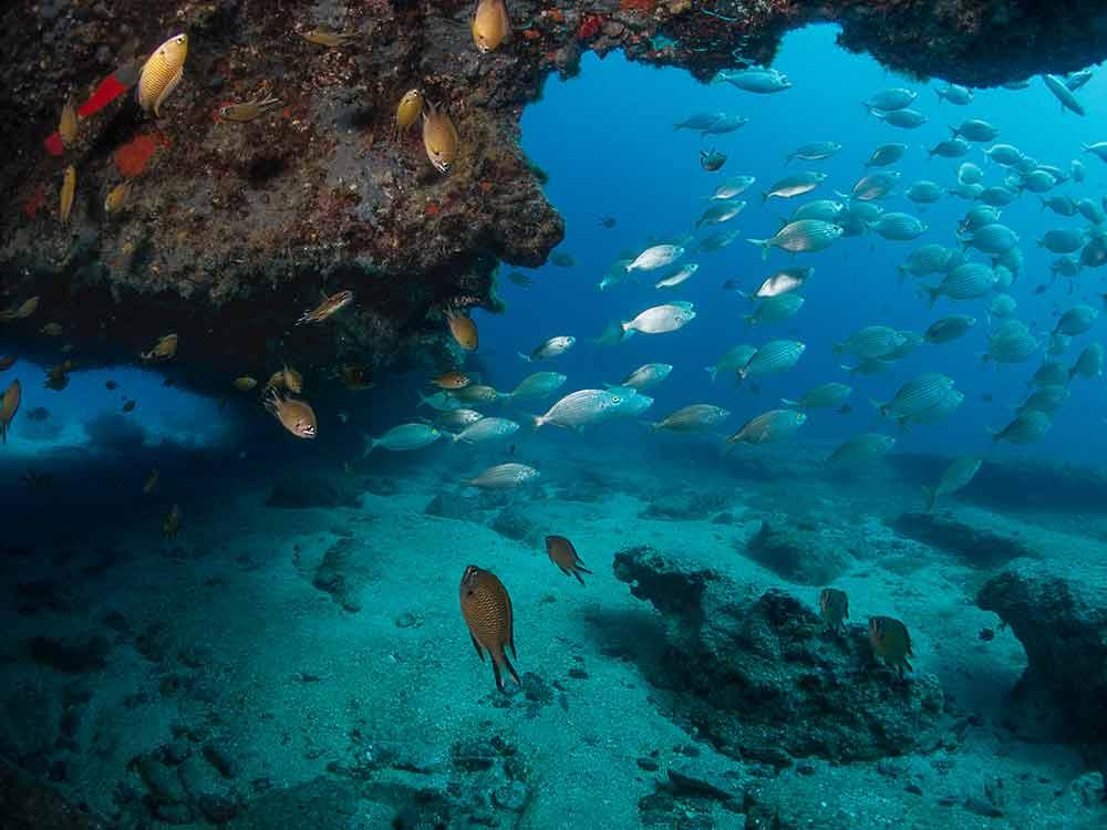 Diving, Coloradas, Dive College Lanzarote, Playa Blanca